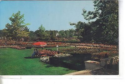A Section of The Jackson & Perkins Rose Gardens, Newark, N. Y. - Cakcollectibles