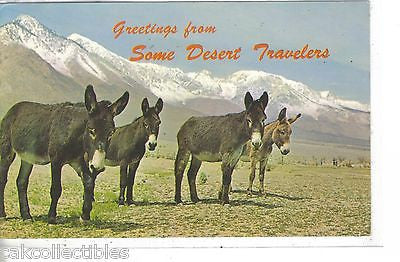 Greetings from Some Desert Travelers (Burros) 1973 - Cakcollectibles