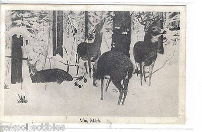 Group of Deer-Mio,.Michigan 1946 - Cakcollectibles