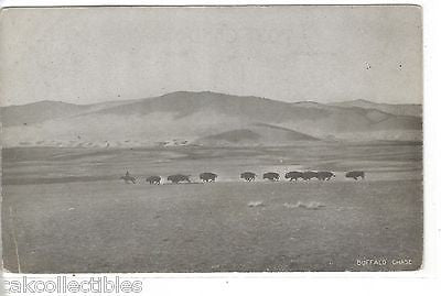 Early Post Card-Buffalo Chase - Cakcollectibles