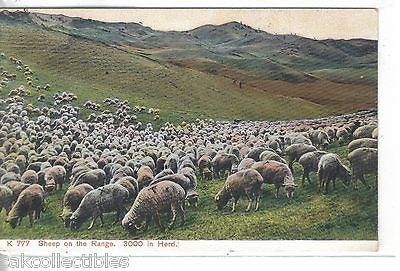 Sheep on The Range-3000 in Herd - Cakcollectibles