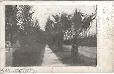 Date Avenue-Rialto,California 1907 - Cakcollectibles