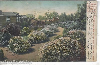 A Garden Scene in Winter in California 1907 - Cakcollectibles