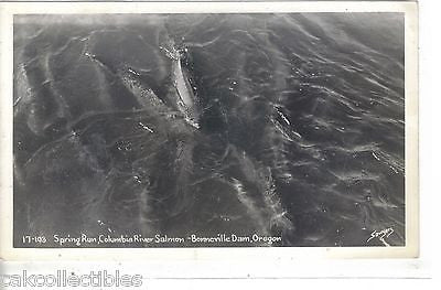 RPPC-Spring Run,Columbia River Salmon-Bonneville Dam,Oregon - Cakcollectibles - 1