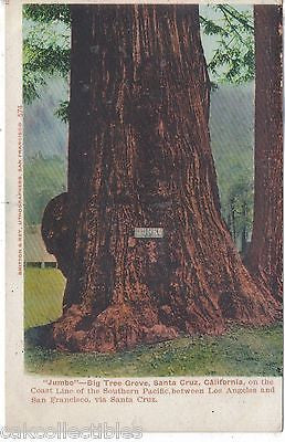 """Jumbo""-Big Tree Grove-Santa Cruz,California UDB - Cakcollectibles"