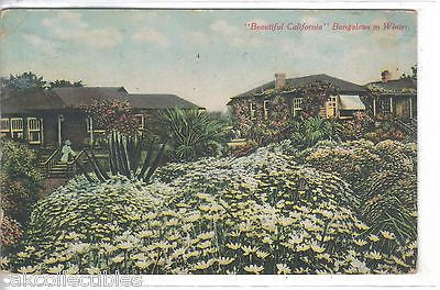 """Beautiful California"" Bungalows in Winter 1912 - Cakcollectibles"