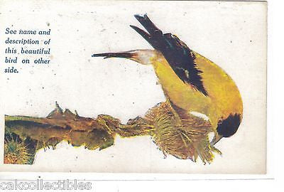 The American Goldfinch Post Card (Writing on back) - Cakcollectibles