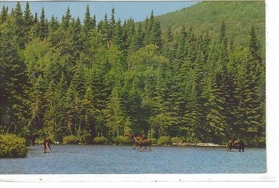 Baxter State Park, Maine - Cakcollectibles