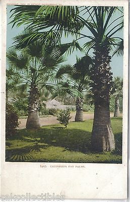 California Fan Palms UDB - Cakcollectibles
