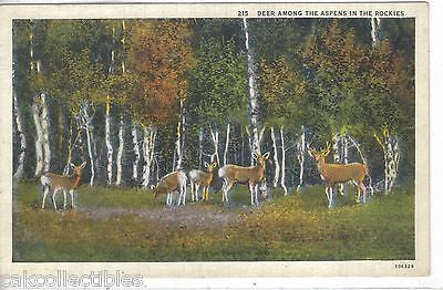 Deer among The Aspens in The Rockies - Cakcollectibles