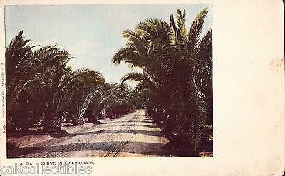 A Palm Drive in California UDB - Cakcollectibles