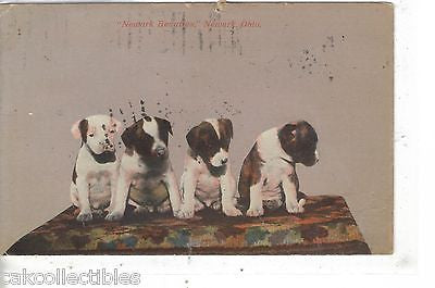 "4 Puppies ""Newark Beauties""-Newark,Ohio  1911 - Cakcollectibles"