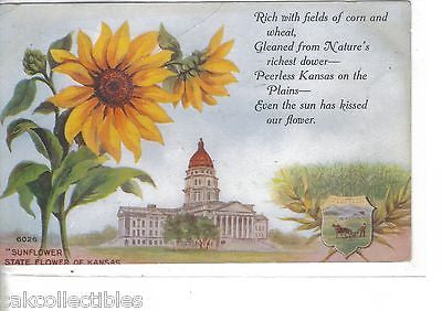 """Sunflower""-State Flower of Kansas 1908 - Cakcollectibles"