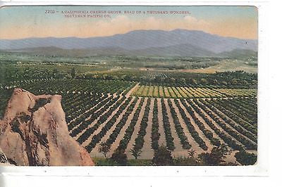 A California Orange Grove,Road of A Thousand Wonders-Southern Pacific Co. 1910 - Cakcollectibles