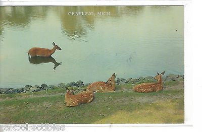 Doe with Triplet Fawns-Grayling,Michigan - Cakcollectibles