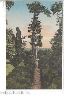 """Ash Lawn"",The Evergreen Garden-Charlottesville,Va (Hand Colored) - Cakcollectibles"