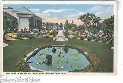 Lily Pond in George Eastman's Gardens-Rochester,New York - Cakcollectibles