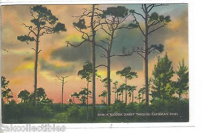 A Florida Sunset through Caribbean Pines 1941 - Cakcollectibles