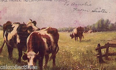 Early Post Card of Cows-1907 - Cakcollectibles