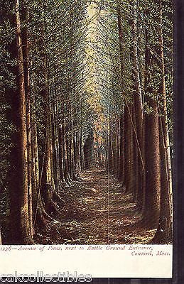 Avenue of Pines neaxt to Battle Ground Entrance-Concord,Massachusetts UDB - Cakcollectibles