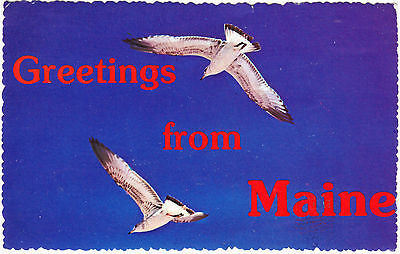 Greetings From Maine Postcard - Cakcollectibles
