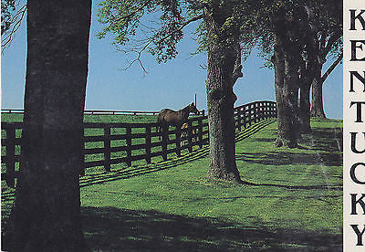 Greetings From Central Kentucky Horse Farm Postcard - Cakcollectibles - 1