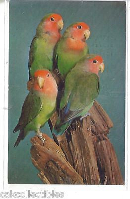Rosey-Faced Lovebirds,National Zoological Park-Washington,D.C. - Cakcollectibles