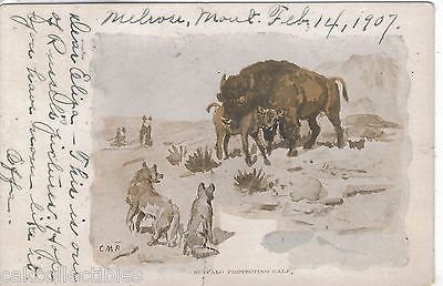 Buffalo Protecting Calf 1907 Signed CMR - Cakcollectibles