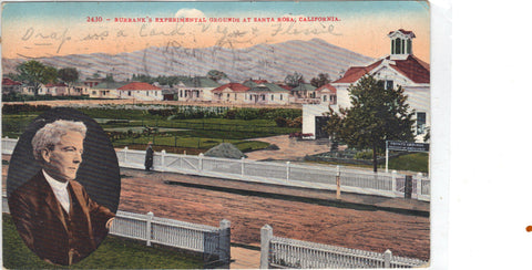 Burbank's Experimental Grounds at Santa Rosa,California - Cakcollectibles - 1