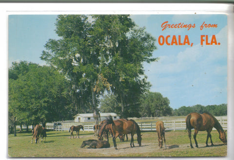 Greetings from Ocala,Florida-Horses - Cakcollectibles - 1