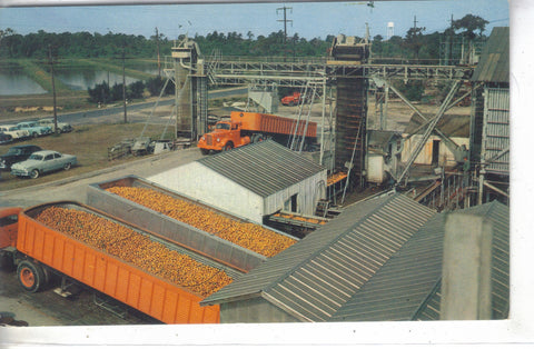 Trucks of Oranges at The Minute Maid Corporation Plant-Florida Post Card - 1