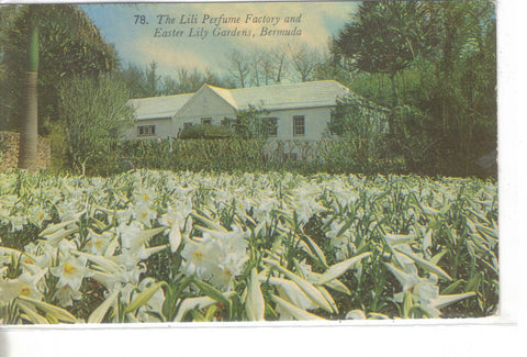 The Lili Perfume Factory and Easter Lily Gardens-Bermuda - Cakcollectibles - 1