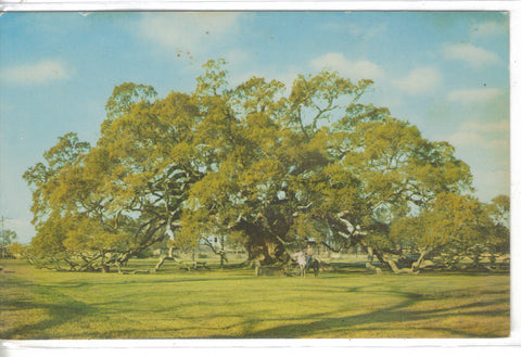 Locke Breaux Live Oak on River Road-Taft,Louisiana - Cakcollectibles - 1