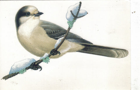 The Gray Jay-Readers Digest Postcard - Cakcollectibles - 1