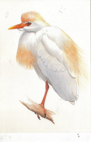 The Cattle Egret-Readers Digest - Cakcollectibles - 1