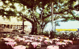 Banyan Court at Moana Hotel - Lanai,Hawaii Vintage Postcard