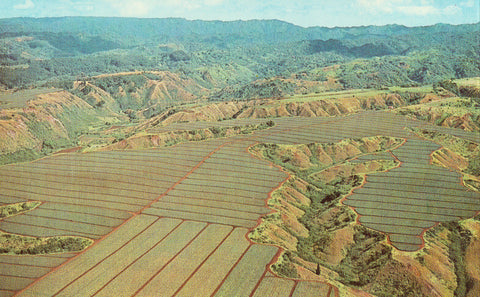 Aerial View - Pineapple Fields - Oahu,Hawaii.Front of collectible postcard