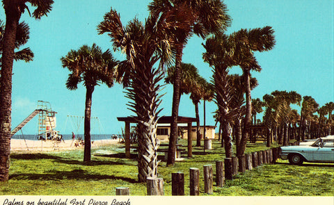 Palms on Fort Pierce Beach - Florida front of vintage postcard