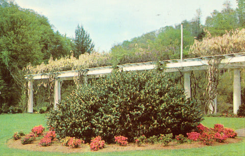 Keesling Gardens near Bluefield,West Virginia.Front of vintage postcard