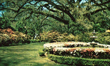 Formal Garden at Azalea Time - Mobile,Alabama front of vintage postcard.Buy postcards here