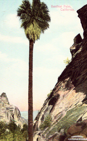 Vintage Postcard Front - Sentinel Palm - California