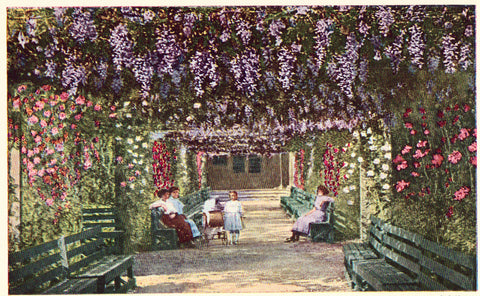 Vintage Postcard Front - Wisteria and Rose Arbor - California