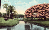 Poinciana Tree,Moanalua Park - Honolulu,Hawaii.Vintage postcard front