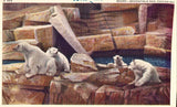 Linen postcard front Bears at Brookfield Zoo in Chicago,Illinois