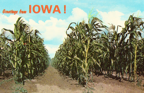 Vintage postcard front.Greetings from Iowa Postcard - Rows of Corn