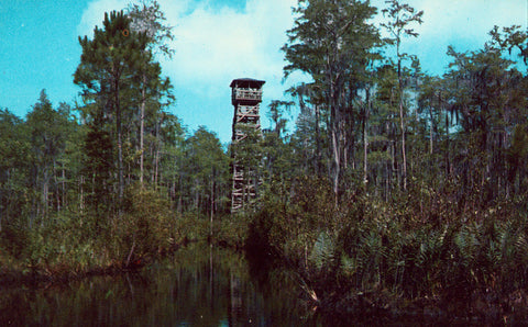 Observation Tower,Okefenokee Swamp Park - Waycross,Georgia