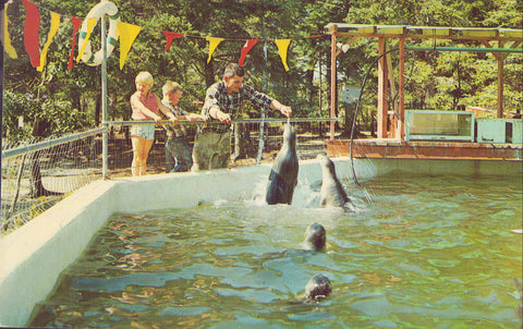 Feeding Fish to Seals,Aqualand-Bar Harbor,Maine 1967