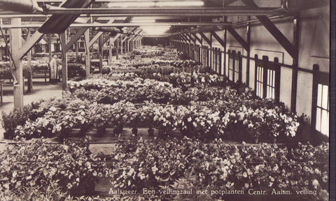 RPPC-Potplants ready for auction-Central Aalsmeer Auction Market-Holland