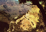 The Famous Mule Train in Grand Canyon - Arizona.Vintage postcard front