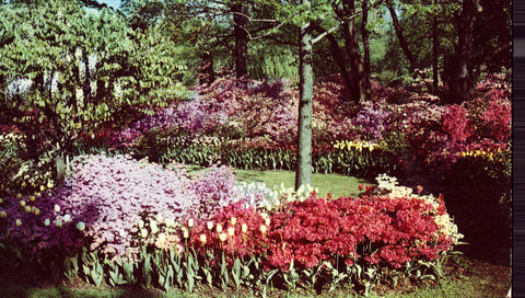 Vintage postcard front.Sherwood Gardens - Baltimore,Maryland